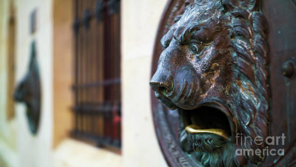 Photograph - Bronce Lion Mailbox by Pablo Avanzini