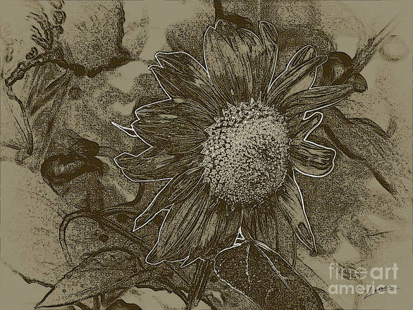 Photograph - Bronzed Out Sunflower by Lance Sheridan-Peel