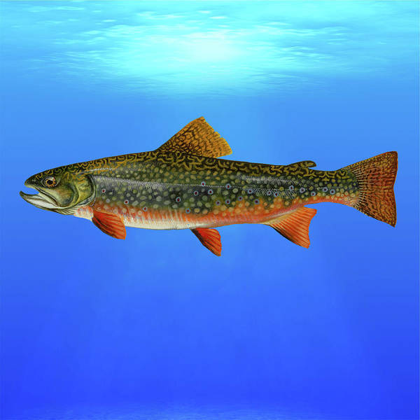 Brook Mixed Media - Brook Trout Blue Lagoon  by Movie Poster Prints