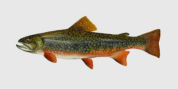 Brook Mixed Media - Brook Trout  by Movie Poster Prints