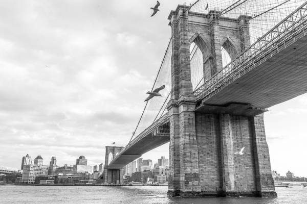 Photograph - Brooklyn Bridge And Seagulls by SR Green