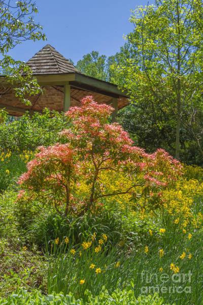 Photograph - Brookside Gardens 1 by Chris Scroggins