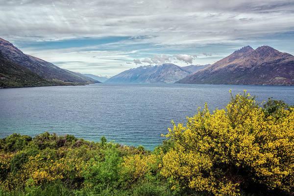 Drift Photograph - Broom Bushes On Lake Wakatipu New Zealand by Joan Carroll