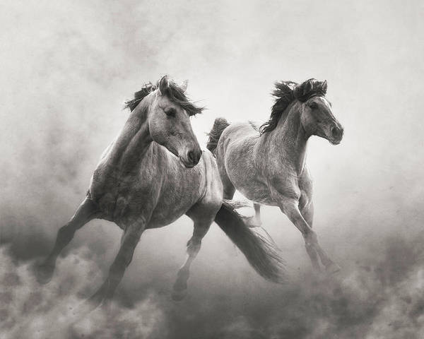 Wall Art - Photograph - Brothers Of The Dust by Ron McGinnis