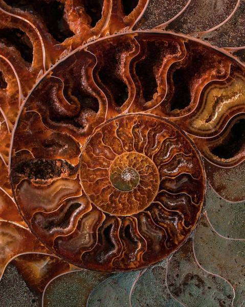 Photograph - Brown And Orange Fossil by Jaroslaw Blaminsky