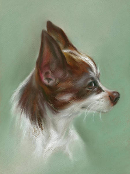 Pastel - Brown And White Chihuahua by MM Anderson