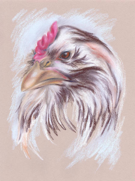 Pastel - Brown And White Hen Portrait by MM Anderson