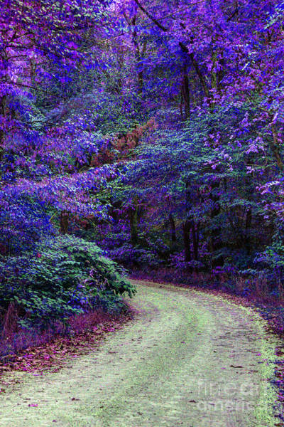 Brown County Indiana Lane False Color Infrared No 1 Art Print