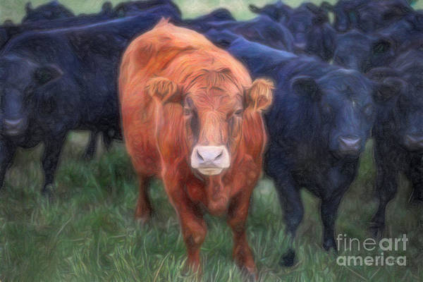 Photograph - Brown Cow by Craig J Satterlee