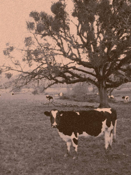 Wall Art - Photograph - Brown Cow by David A Brown