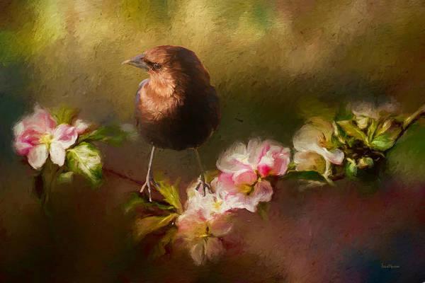 Painting - Brown-headed Cowbird - Painting by Ericamaxine Price