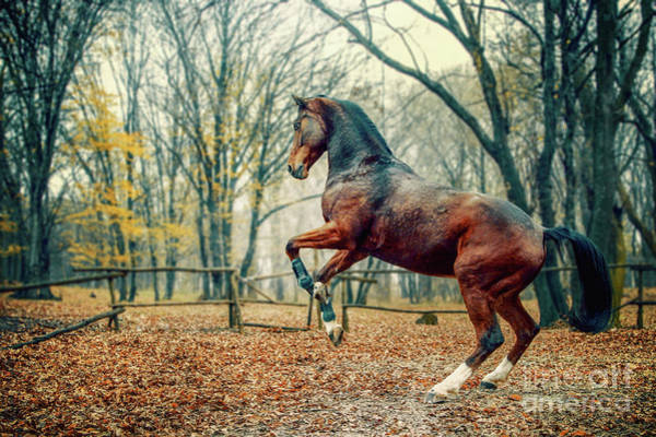 Photograph - Brown Horse In The Forest by Dimitar Hristov