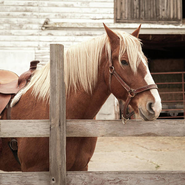 Wall Art - Photograph - Brown Horse by Lucid Mood