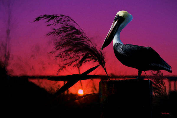 Painting - Brown Pelican At Sunset - Painted by Ericamaxine Price