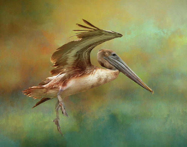 Photograph - Brown Pelican Landing by Gloria Anderson