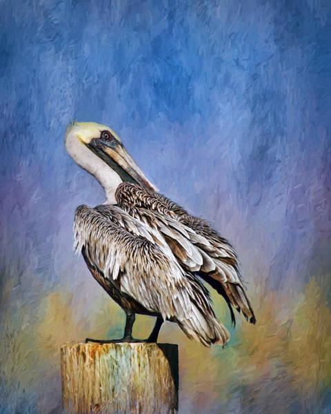Gular Photograph - Brown Pelican - Preening by Nikolyn McDonald