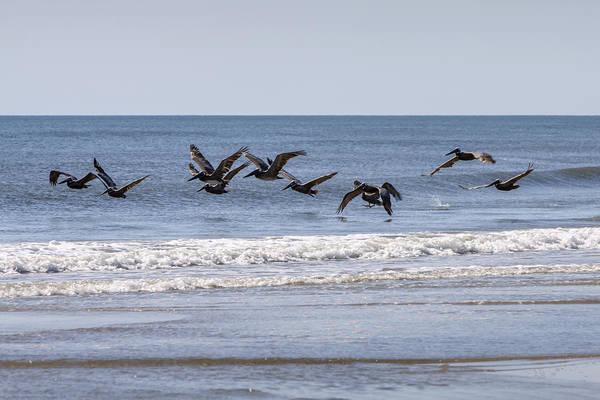 Photograph - Brown Pelicans In Flight by Liza Eckardt