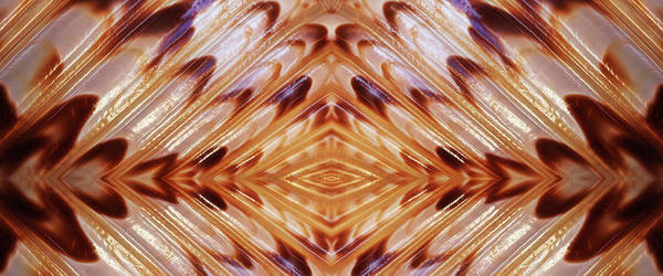 Photograph - Brown Shell Abstract Panoramic by Gill Billington