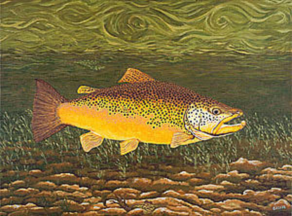 Angler Art Painting - Brown Trout Fish Art Print Touch Down Brown Trophy Size Football Shape Brown Trout Angler Angling by Baslee Troutman