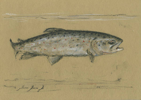 Fly Fishing Painting - Brown Trout by Juan Bosco
