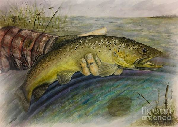 Trout Watercolor Wall Art - Painting - Brown Trout by Ted Reeves