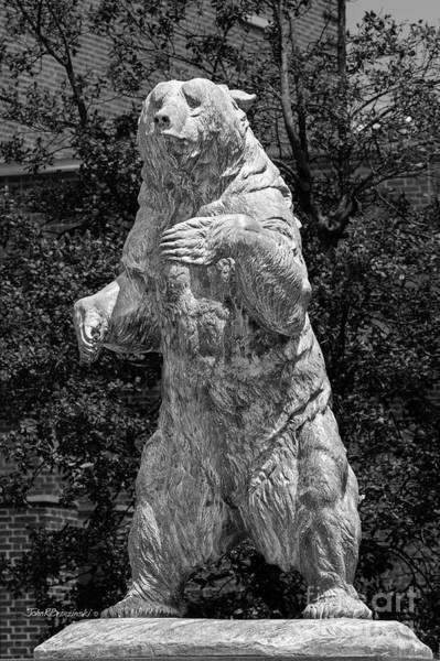 Photograph - Brown University Bear by University Icons