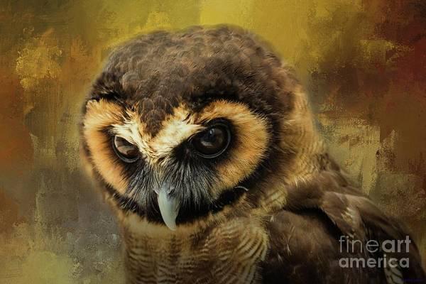 Brown Wood Owl Art Print