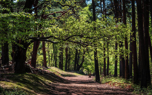 Photograph - Brownsea Island Woodland by Framing Places