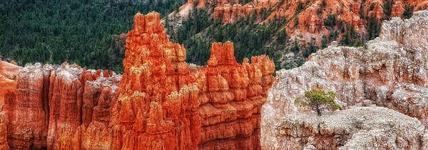 Bryce Canyon - Lone Tree Art Print
