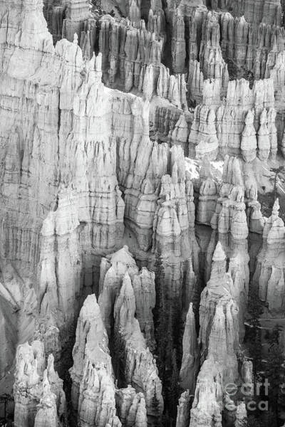 Wall Art - Photograph - Bryce Canyon Black And White Forest Of Columns by Mike Reid