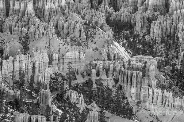Wall Art - Photograph - Bryce Canyon Details Black And White by Mike Reid