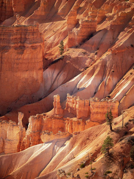 Photograph - Bryce Canyon by Emily Dickey