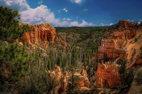 Bryce Canyon From The Top Art Print
