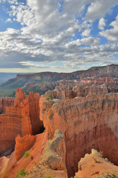 Photograph - Bryce Canyon Glow by Ray Mathis