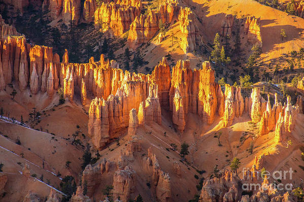 Wall Art - Photograph - Bryce Canyon Golden Dusk Spires by Mike Reid