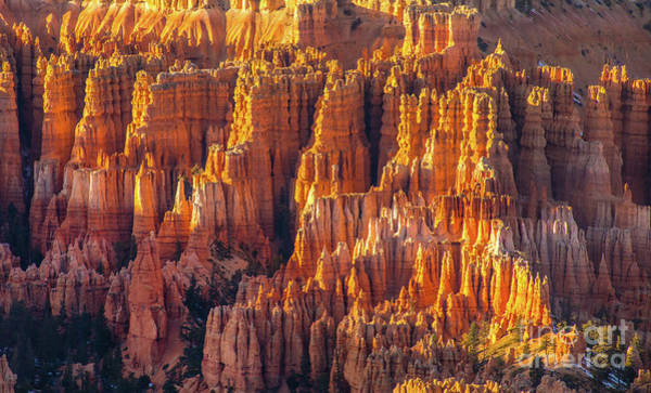 Wall Art - Photograph - Bryce Canyon Golden Light Details by Mike Reid