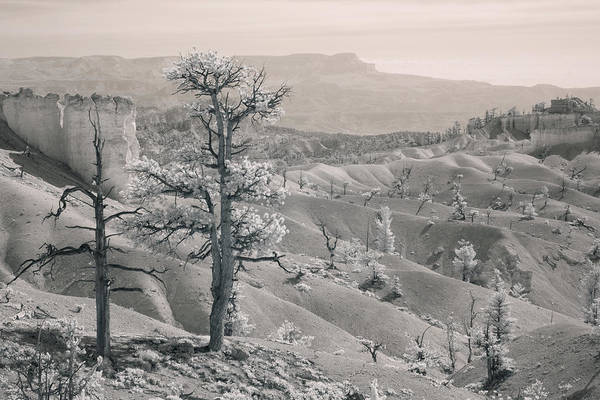 Photograph - Bryce Canyon Infrared by Mike Irwin