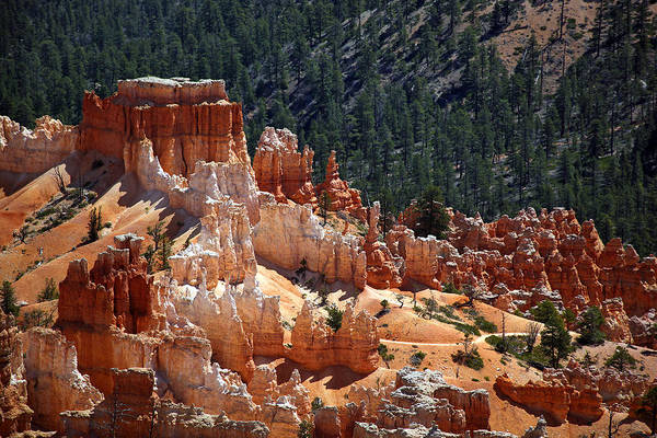Red Mountain Photograph - Bryce Canyon  by Jane Rix