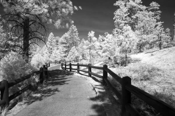 Ir Photograph - Bryce Canyon Trail by Mike Irwin