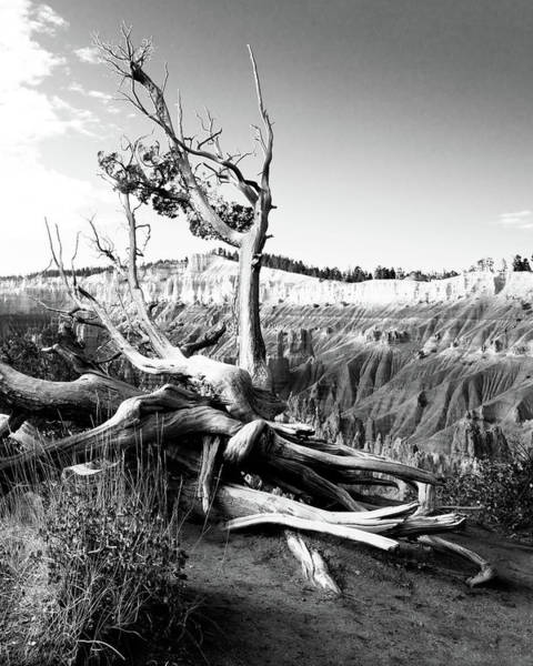 Photograph - Bryce Canyon Tree by Norman Hall