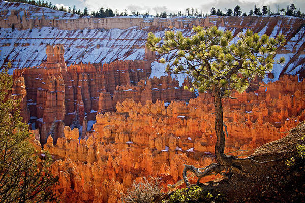 Photograph - Bryce Canyon by Wesley Aston