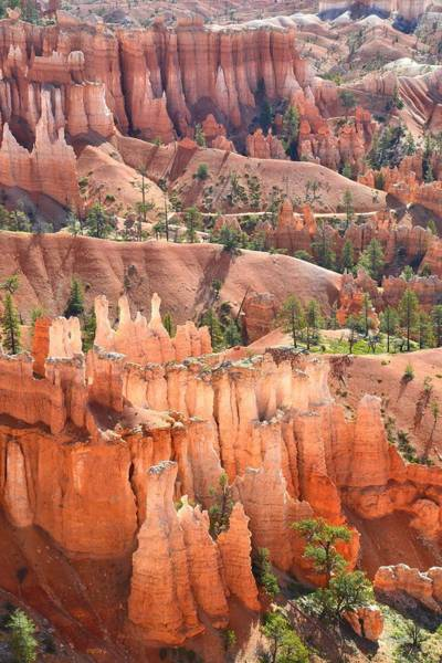 Photograph - Bryce Canyon's Queen Garden by Ray Mathis