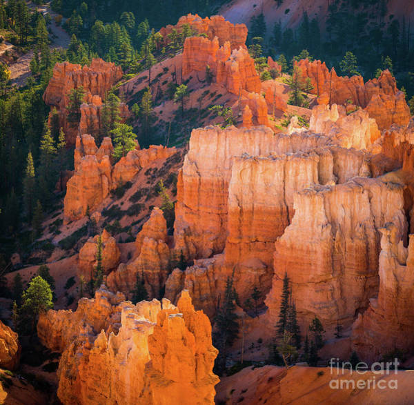 Wall Art - Photograph - Bryce Hoodoos by Inge Johnsson