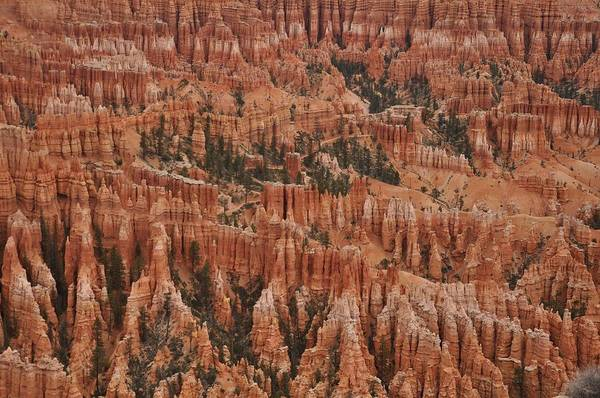 Photograph - Bryce Point by Frank Madia