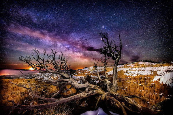 Photograph - Bryce Tree Milky Way by Michael Ash