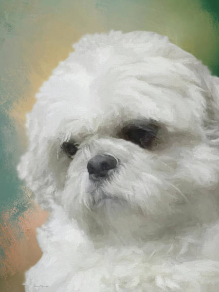 Painting - Bubba May 2016-0477-painted by Ericamaxine Price