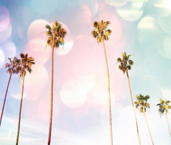Photograph - Bubble Gum Palm Trees by Marianna Mills