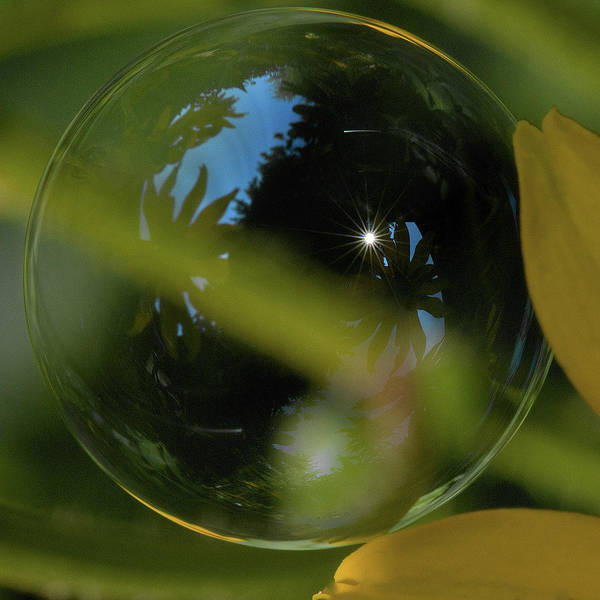 Photograph - Bubble In The Garden by Bob Cournoyer