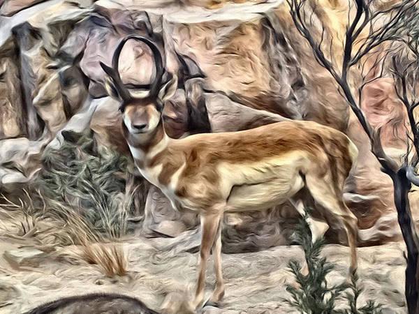Photograph - Buck Antelope by Dennis Buckman