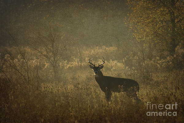 Photograph - Buck by Charles Owens